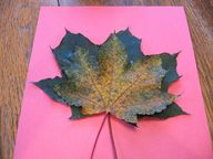 Maple Leaf Turkey Cr