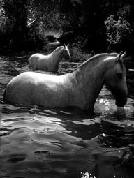 horses: bathing in t