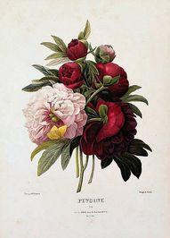 vintage floral illus