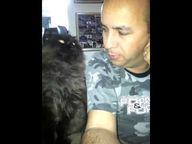Cat Demands More Pet