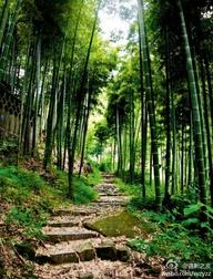 bamboo,bamboo