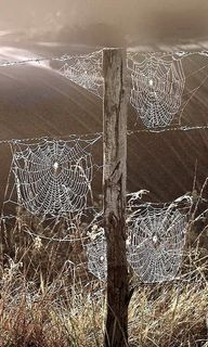 Spiderwebs in the Fa
