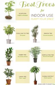 best trees for indoo