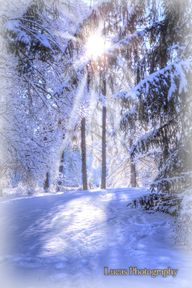 Winter at Finch Arbo