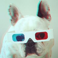 Frenchies 3D