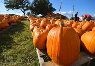Pumpkin Patch! Love.