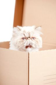 Cat Poetry: Boxes By