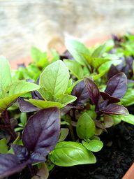 Indoor Herb Gardenin