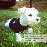 Top 10 Best Dog Quot