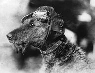 dog photo | Strange