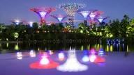 Glowing Gardens
