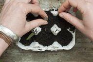 Propagating plants =