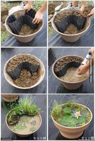 Garden pond in a pot
