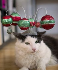 Holiday Ornament Cat