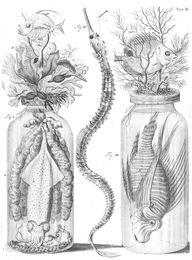 The Embalming Jars o