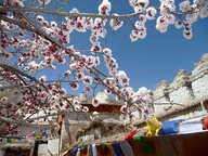 Spring in Ladakh - A