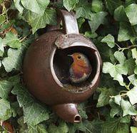 Teapot bird nester,