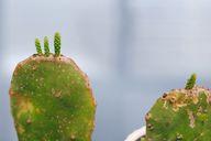 propogating cactus