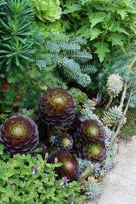 Succulents add contr