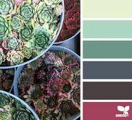 Succulent spectrum..