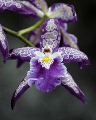 ^Purple orchid