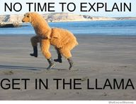Get in the Llama!!!!