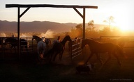 Ranch horses. | Phot