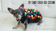 DIY Candy Crush Dog