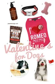 Dog Valentine's Day
