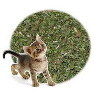 Catnip Leaf Cut & Si