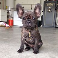 Those ears are spect