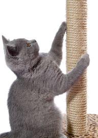 Cat Behavior:  Why D
