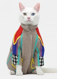 A kitty in a coat