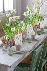 A row of paperwhites