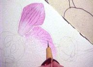 Painting Orchids in