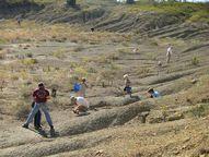 Mineral Wells Fossil