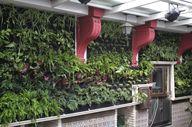 Primer jardín vertic