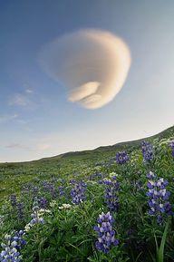 Aleutian Islands, Al