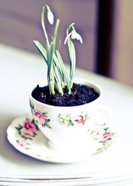 flower pot made of c