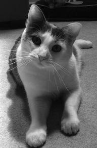 Feline Acne:  What Y
