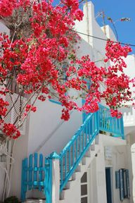 Pink flowers, blue a