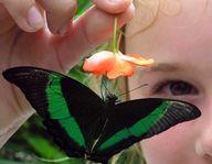 DIY Butterfly Garden