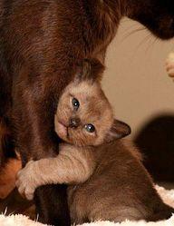 Precious!  #cats #ki