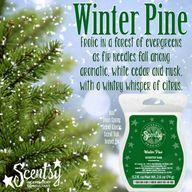 Scentsy Winter Pine