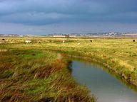Elmley_marshes.jpg 8