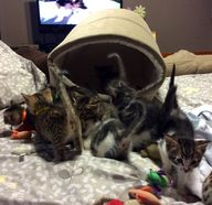 Our eight foster kit