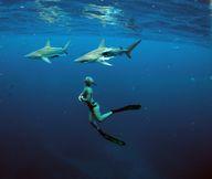 Entre tiburos