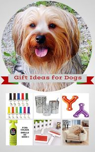 Fun Gift Ideas for D