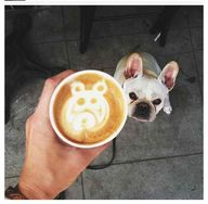 Latte + Frenchie = B
