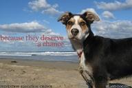 Island Dog created t